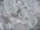 20080121_p1060733_2