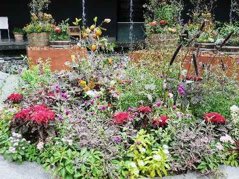カラヤン広場の鉢植えたち