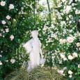 白い彫像と薔薇