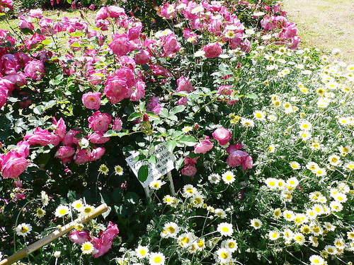 薔薇以外のお花もあります