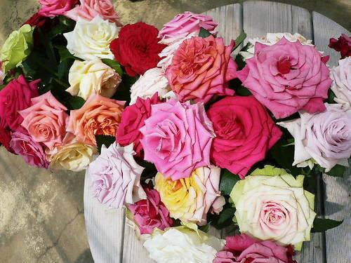 温室のあざやかな切り薔薇