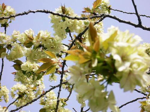25 からまる枝・花・葉