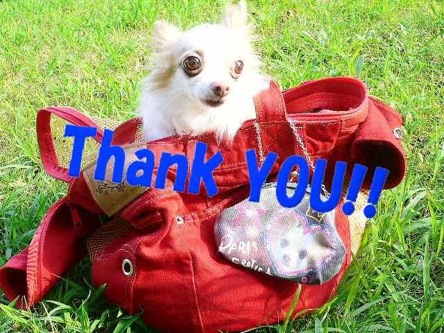 Thankyou_3